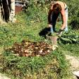Permaculture - 32