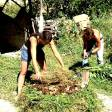 Permaculture - 33