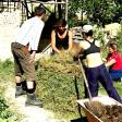Permaculture - 36
