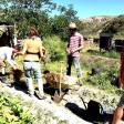 Permaculture - 37